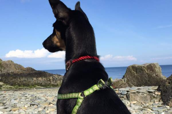Four-month-old Darwin loves his new home on the Isle of Man by the sea