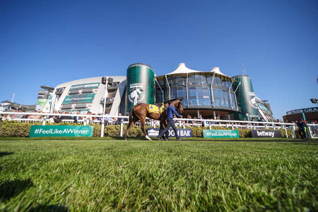 A horse being walked on the grass on a sunny day at Aintree Racecourse, Liverpool.